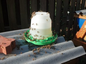 Feeding Bees on Hive